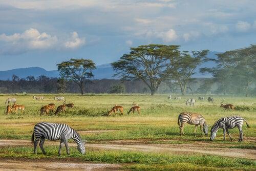 Toutes les espèces sont-elles également utiles pour la conservation de la biodiversité?