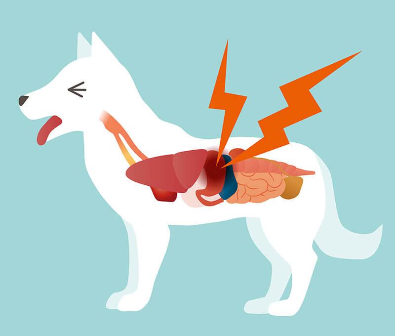 Ulcère gastrique chez le chien: que faire?