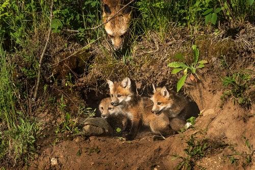 Qu'est-ce qu'un centre de récupération d'animaux sauvages?