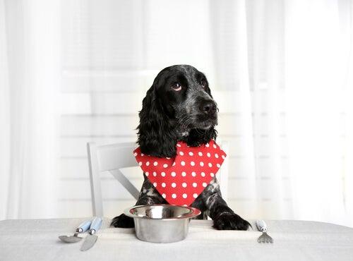 7 astuces pour ceux qui nourrissent leur chien avec de la nourriture humide