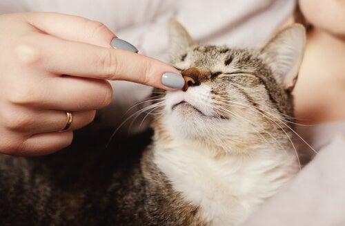 Des études révèlent que les chats peuvent avoir différentes personnalités