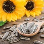 Graines de tournesol: 3 avantages pour vos animaux domestiques