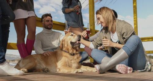 Avantages de la levure de bière pour chiens