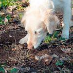 Pourquoi mon chien mange-t-il de la terre? Raisons principales