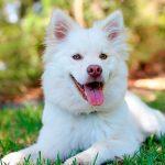 Comment garder les cheveux blancs d'un chien propres? Pourboires