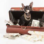 Légalité des testaments en faveur des animaux
