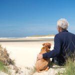 3 problèmes de santé à considérer chez les chiens âgés