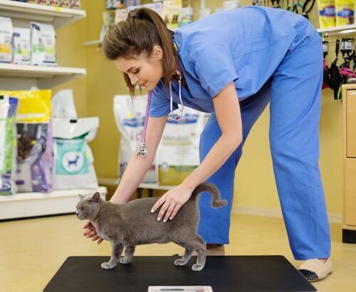 Est-il important de peser votre chat régulièrement?