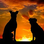 Les races de chiens les plus rares et les plus inconnues