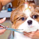 Coupes de cheveux pour chiens - Types et exemples
