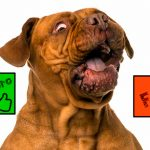 Faux mythes sur la nutrition des chiens