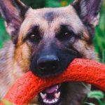 L'importance du jeu dans l'éducation canine