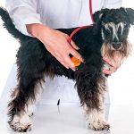 Souffle cardiaque chez le chien - diagnostic et traitement