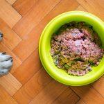 Compléments nutritionnels maison pour chiens