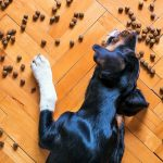 Aliments pour chiens atteints de pancréatite