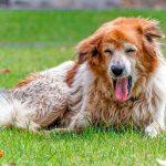 Mon chien vomit - causes et comment agir