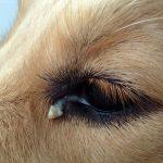 Mon chien a des puces vertes, est-il malade?