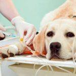 Symptômes d'empoisonnement chez les chiens