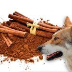 Avantages de la cannelle chez les chiens et quantité recommandée