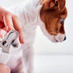 Comment couper les ongles d'un chien à la maison