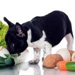 Recettes de nourriture pour chiens maison