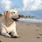Que faire si mon chien est piqué par une méduse?