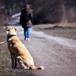 Comment puis-je aider un chien abandonné?