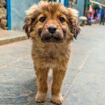 Adopter un chien abandonné Comment faire disparaître la peur?