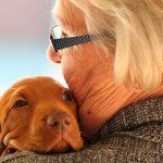 Top 10 des races de chiens les plus affectueuses avec les personnes âgées