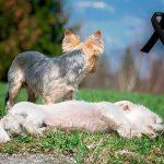 Comment aider un chien à faire face à la mort d'un autre chien