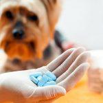 Anti-inflammatoires pour chiens, quels sont les plus efficaces et les plus sûrs?