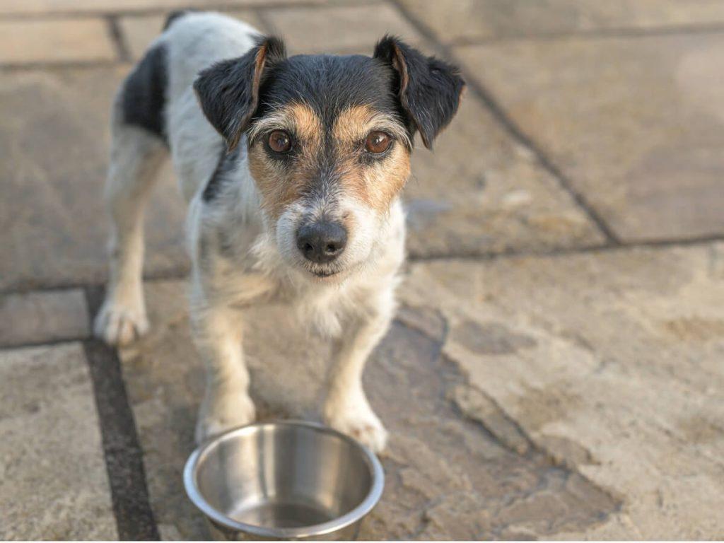 10 symptômes de malnutrition chez le chien