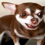 Apprenez à empêcher votre chien d'être agressif