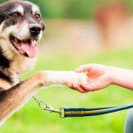 Renforcement positif chez le chien