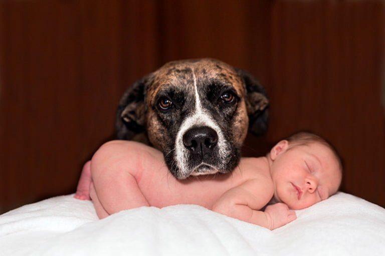 Que faire pour que le chien s'entende avec le bébé