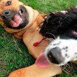 Comment socialiser un chien