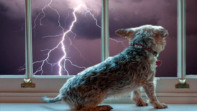 Comment calmer un chien qui a peur des tempêtes