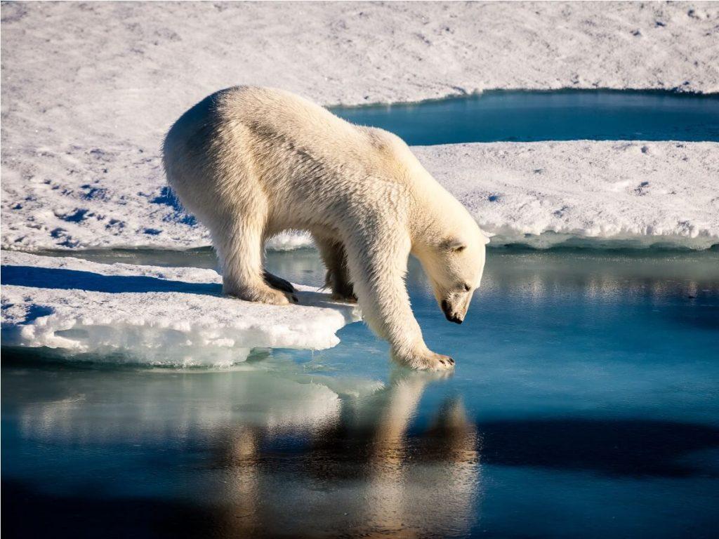 16 animaux en danger d'extinction en 2021