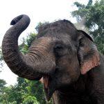 Comportement des éléphants