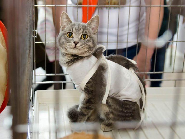 Prendre soin d'un chat stérilisé