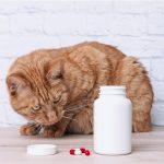 Nolotil pour chats : utilisations et dosage