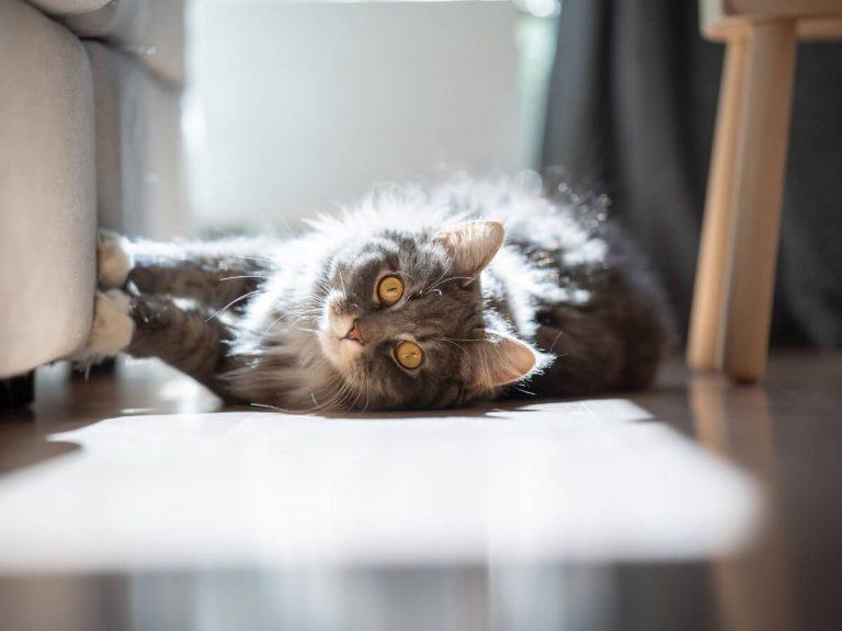 Pourquoi les chats aiment le soleil ?