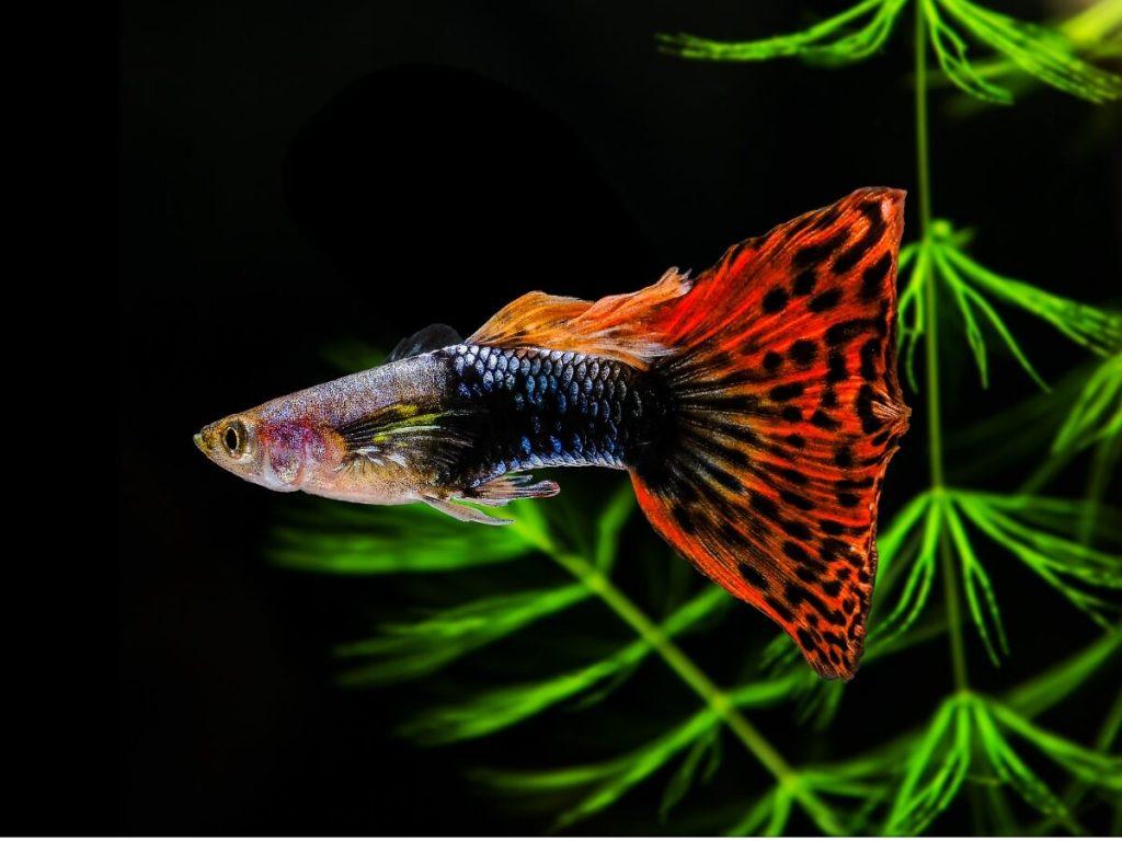 12 poissons pour les débutants