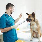 Prendre soin d'un chien anémique