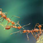 12 curiosités de fourmis