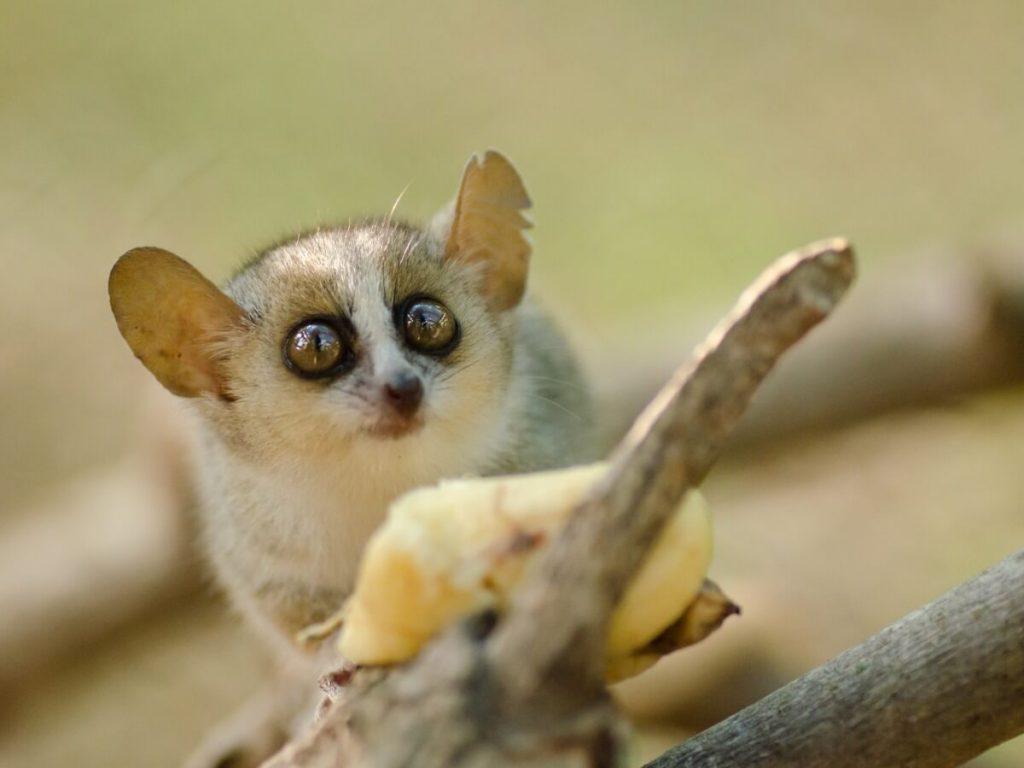 Les 10 plus petits mammifères du monde