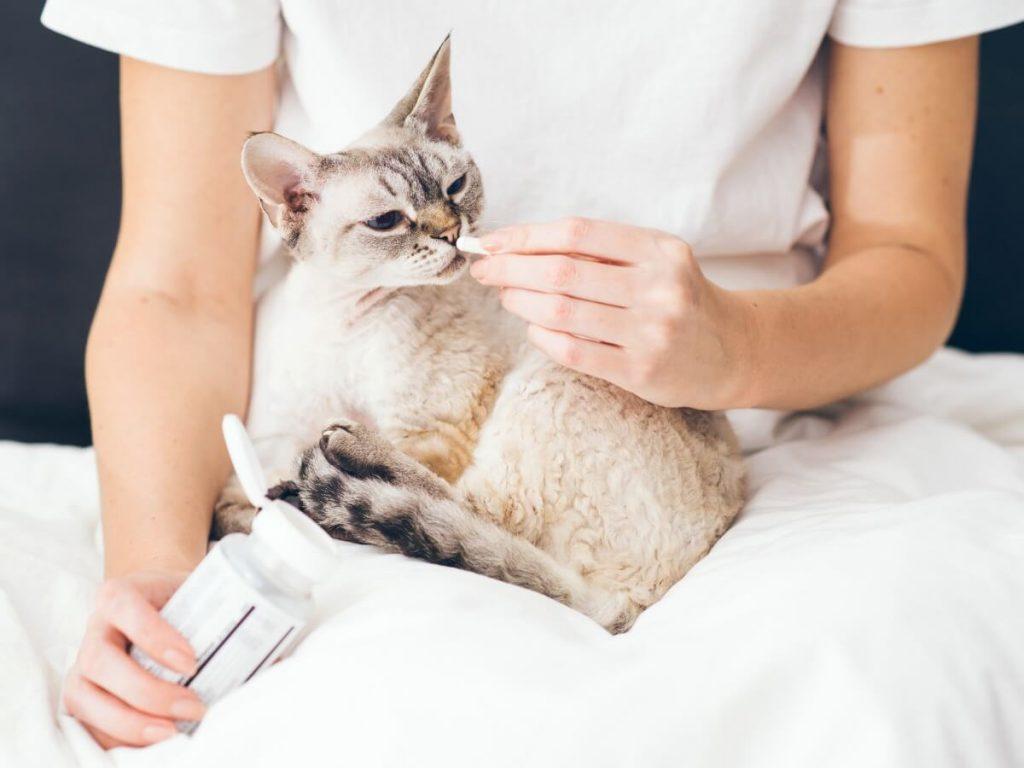 Buprex pour chats : posologie et effets secondaires