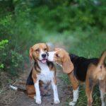 7 maladies sexuellement transmissibles chez les animaux de compagnie