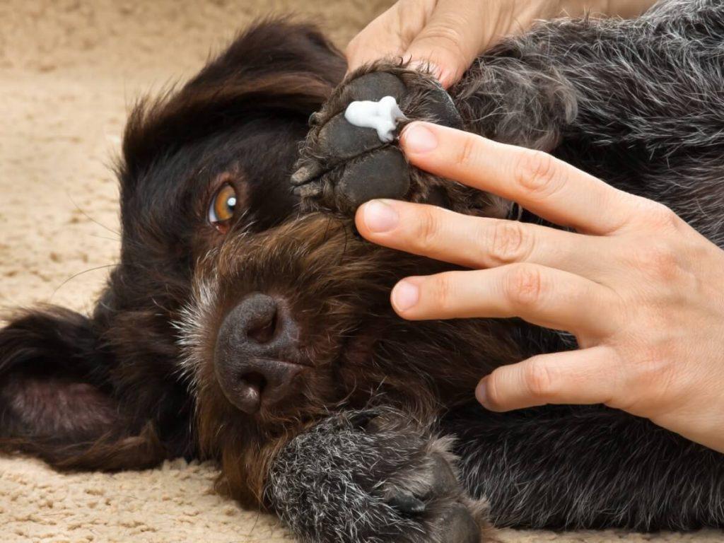 Perméthrine pour chiens : posologie et effets secondaires