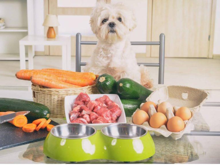 5 aliments sains pour chiens